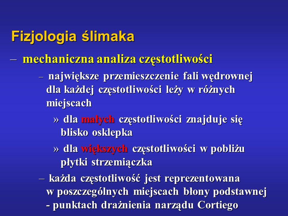 Fizjologia ślimaka mechaniczna analiza częstotliwości