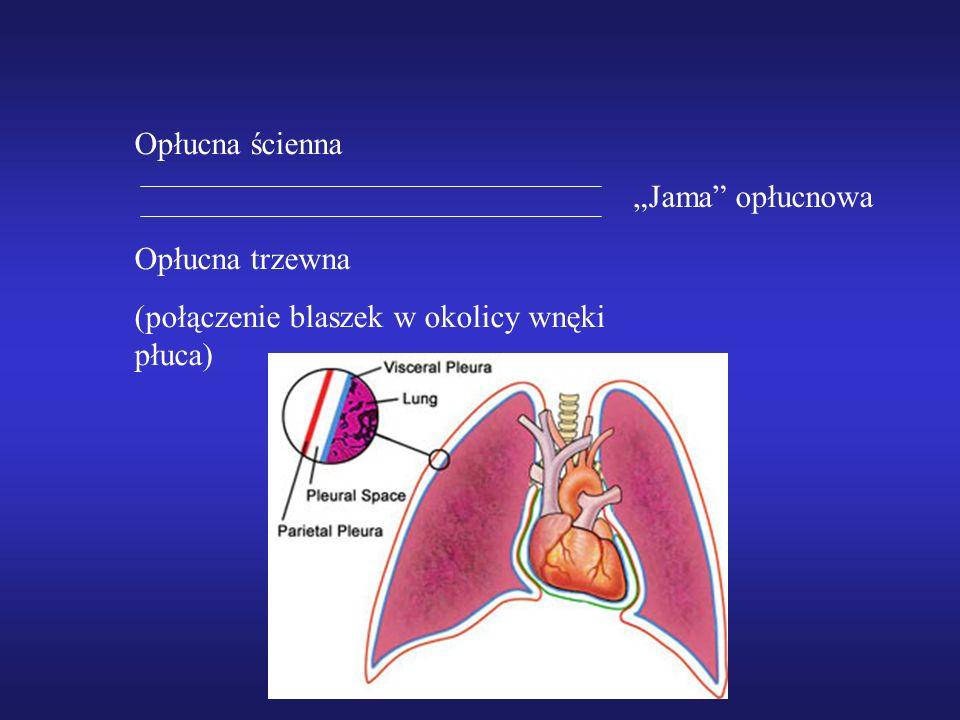 """Opłucna ścienna Opłucna trzewna (połączenie blaszek w okolicy wnęki płuca) """"Jama opłucnowa"""