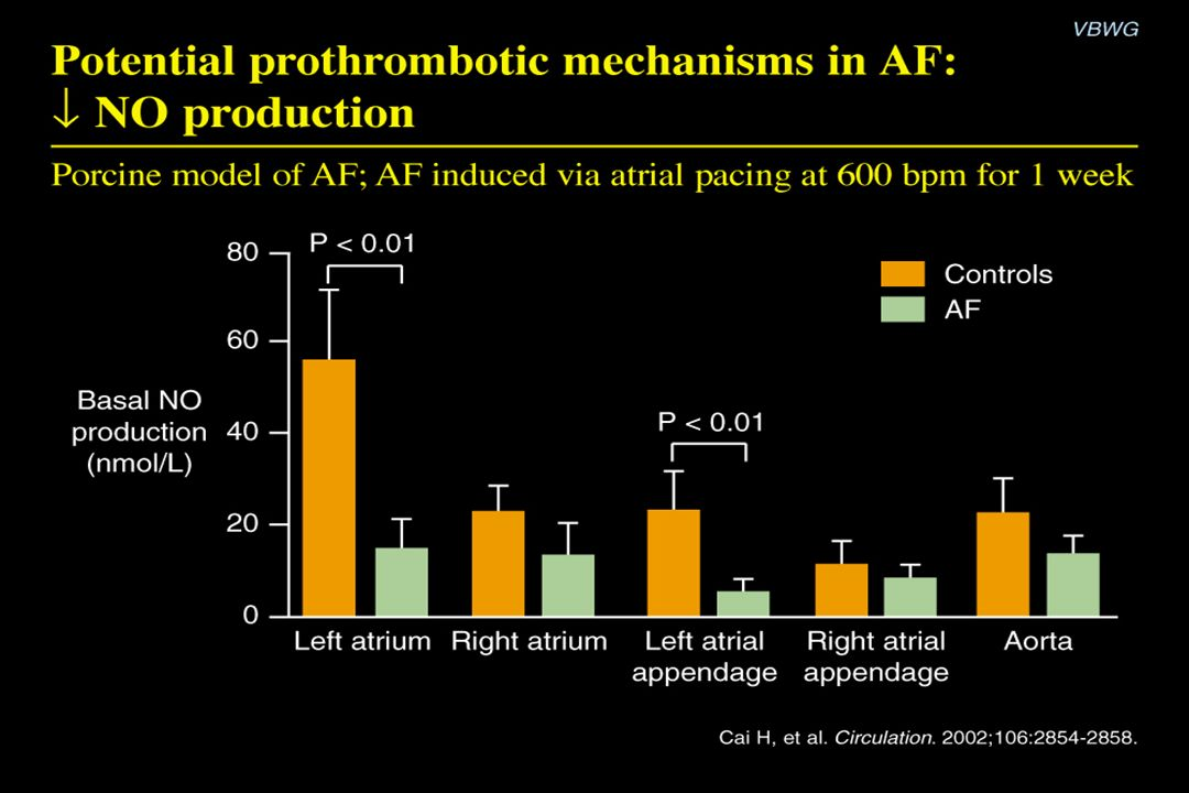 Potential prothrombotic mechanisms in AF: ↓ NO production