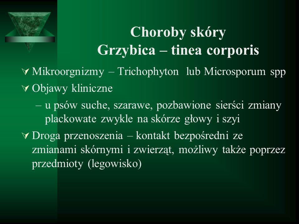 Choroby skóry Grzybica – tinea corporis