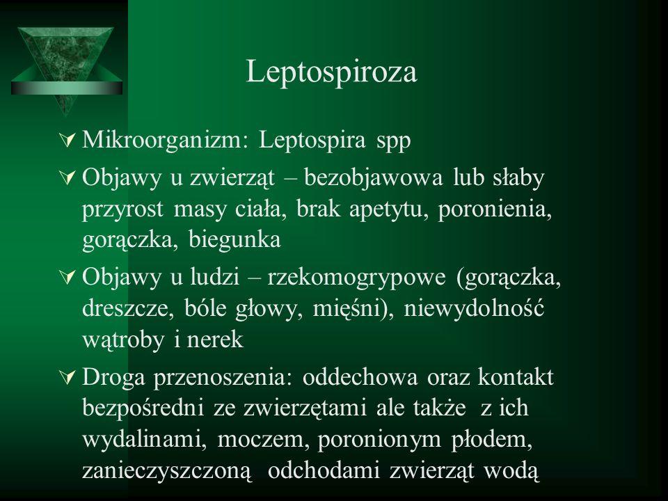 Leptospiroza Mikroorganizm: Leptospira spp