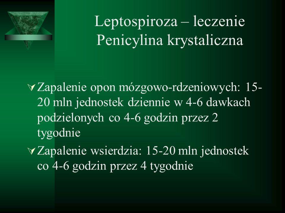 Leptospiroza – leczenie Penicylina krystaliczna