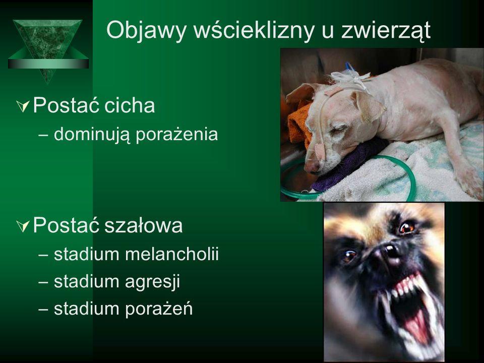 Objawy wścieklizny u zwierząt