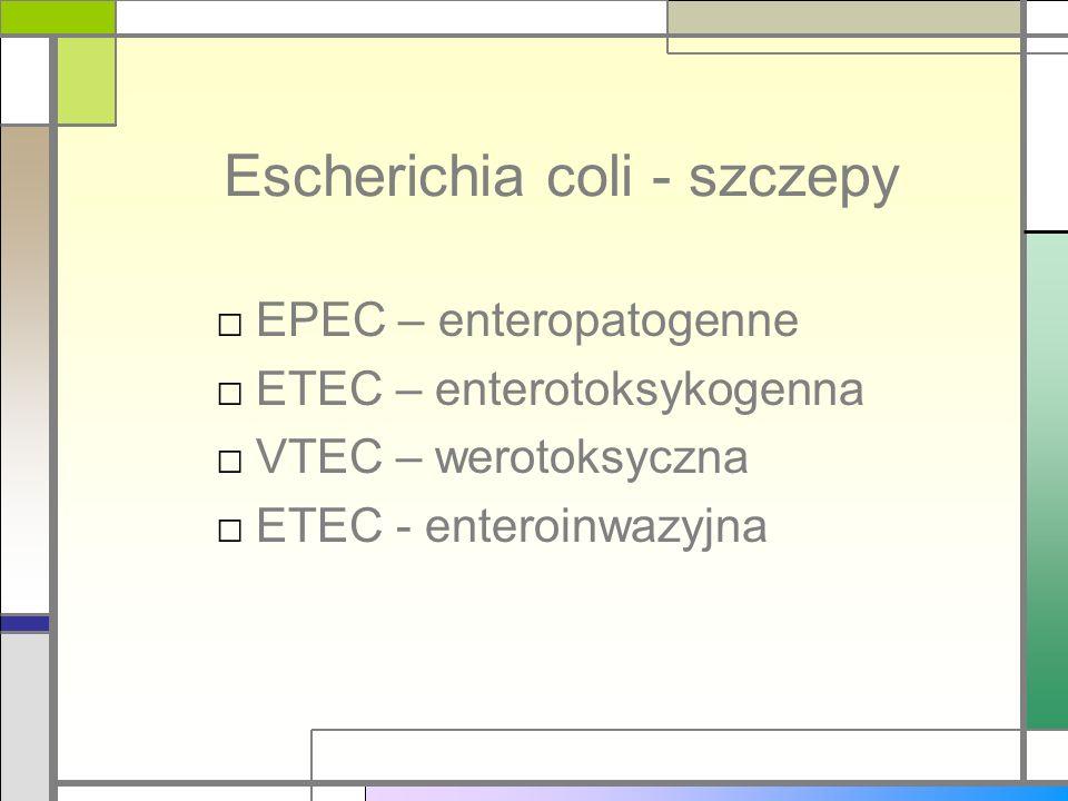 Escherichia coli - szczepy