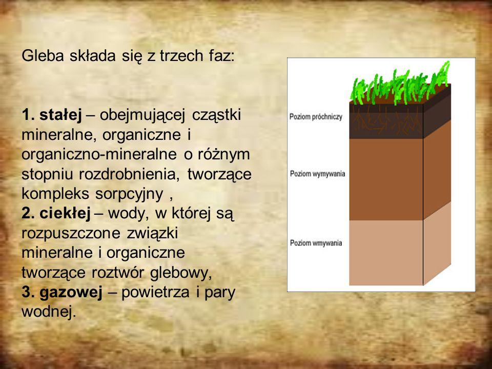 Gleba składa się z trzech faz: 1