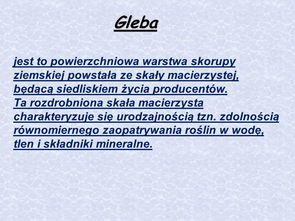 Gleba