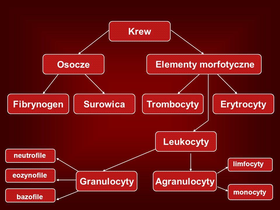 Krew Osocze Elementy morfotyczne Fibrynogen Surowica Trombocyty