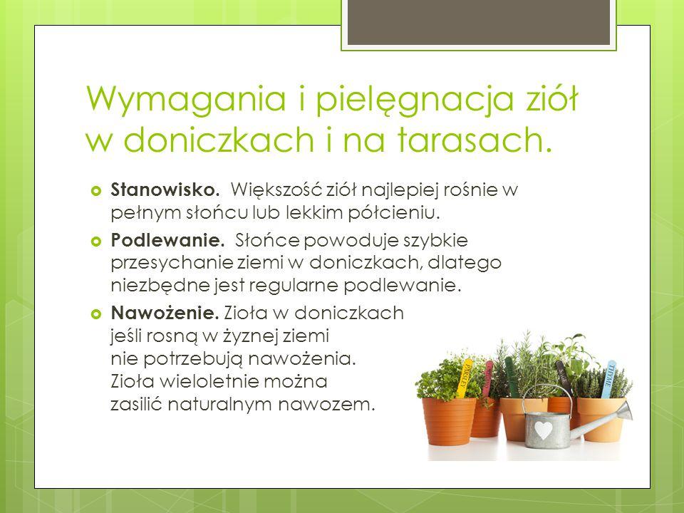 Wymagania i pielęgnacja ziół w doniczkach i na tarasach.