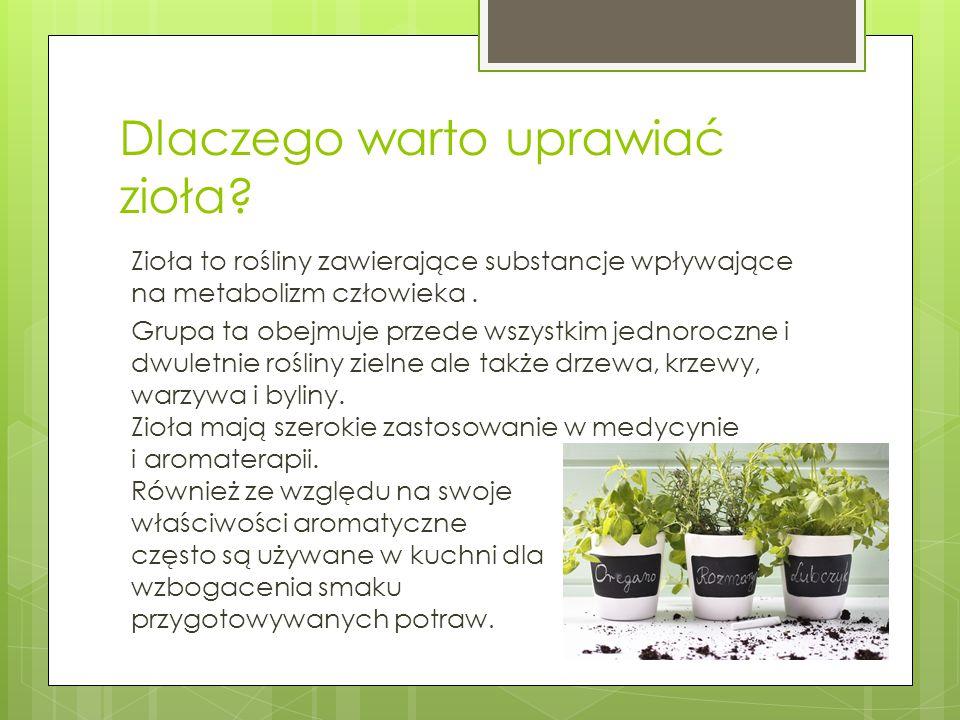 Dlaczego warto uprawiać zioła