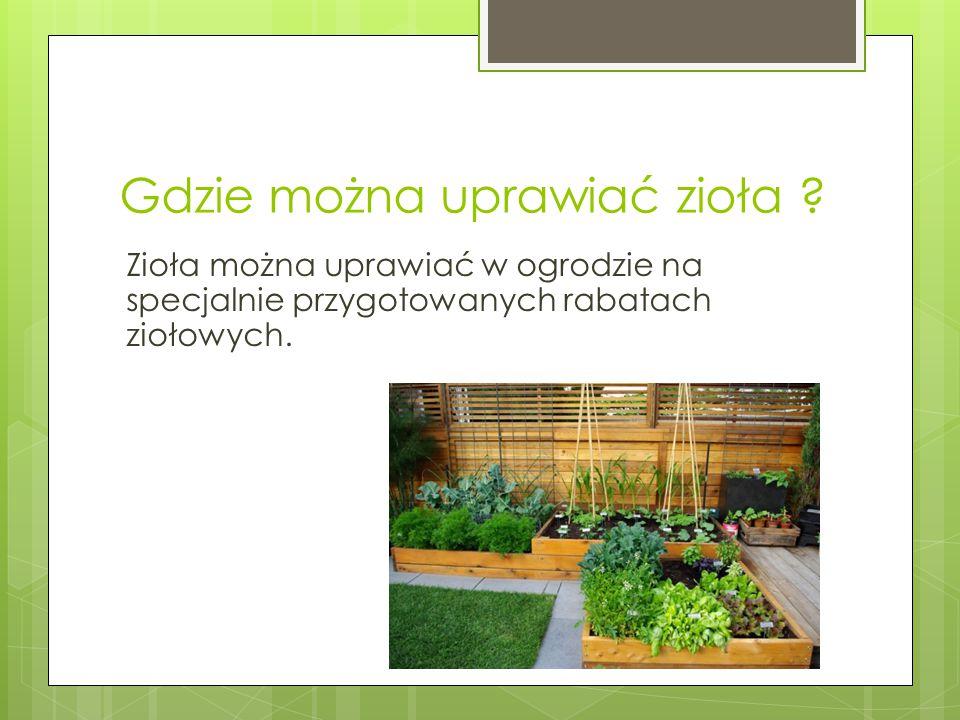 Gdzie można uprawiać zioła