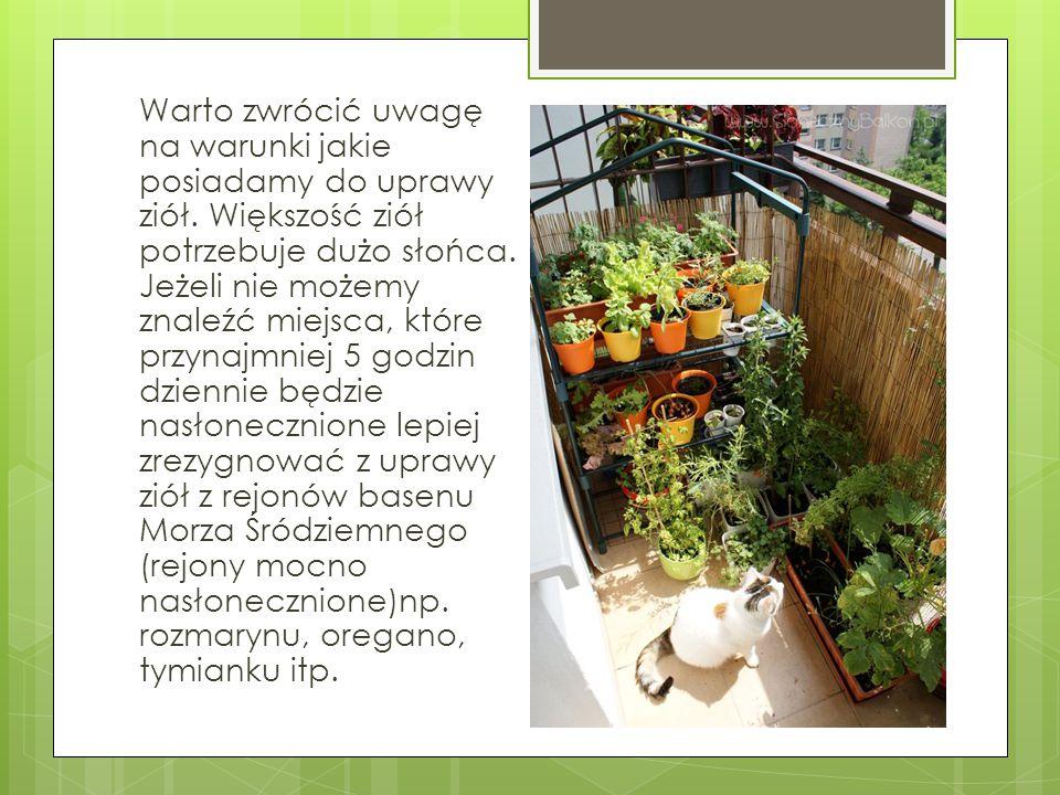 Warto zwrócić uwagę na warunki jakie posiadamy do uprawy ziół