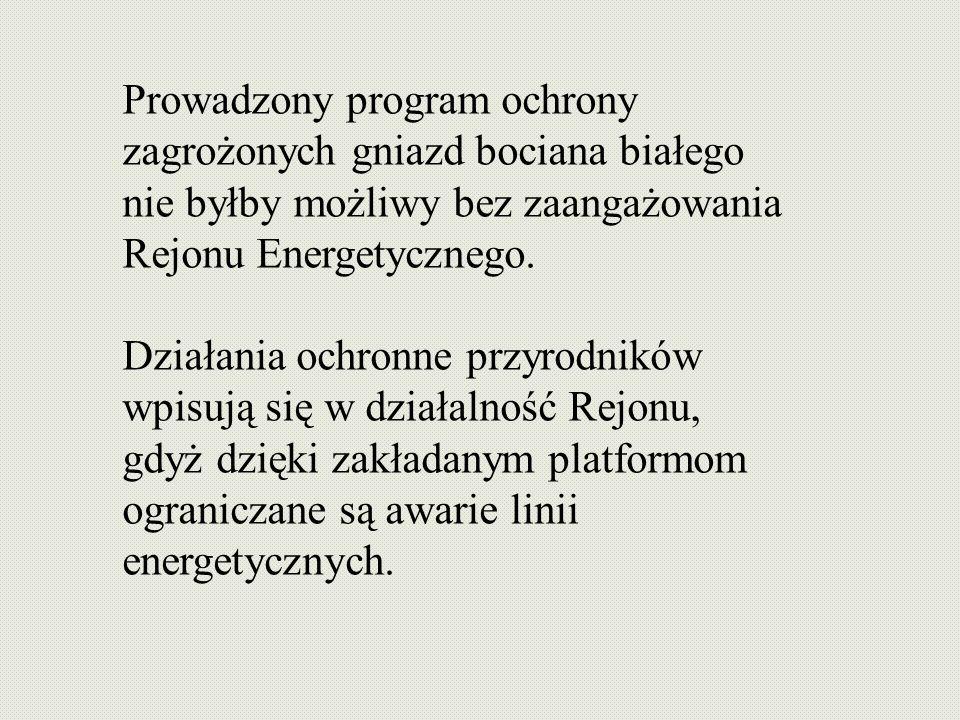 Prowadzony program ochrony zagrożonych gniazd bociana białego nie byłby możliwy bez zaangażowania Rejonu Energetycznego.