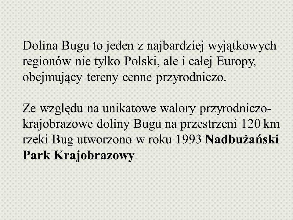 Dolina Bugu to jeden z najbardziej wyjątkowych regionów nie tylko Polski, ale i całej Europy, obejmujący tereny cenne przyrodniczo.