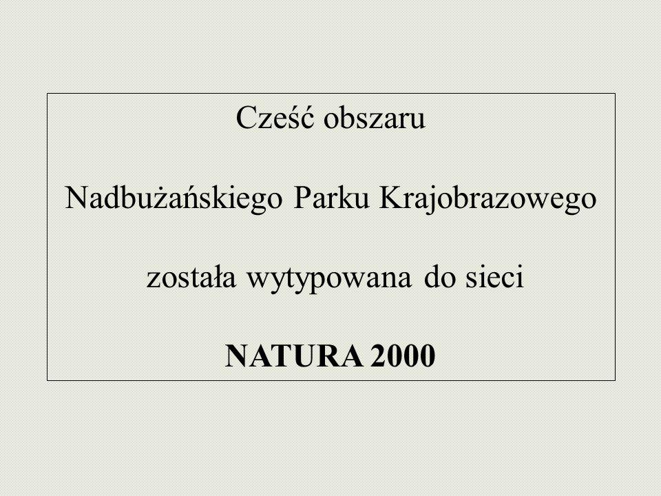 Nadbużańskiego Parku Krajobrazowego została wytypowana do sieci