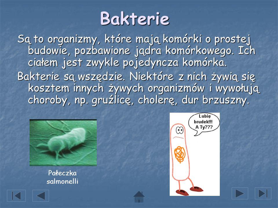 BakterieSą to organizmy, które mają komórki o prostej budowie, pozbawione jądra komórkowego. Ich ciałem jest zwykle pojedyncza komórka.