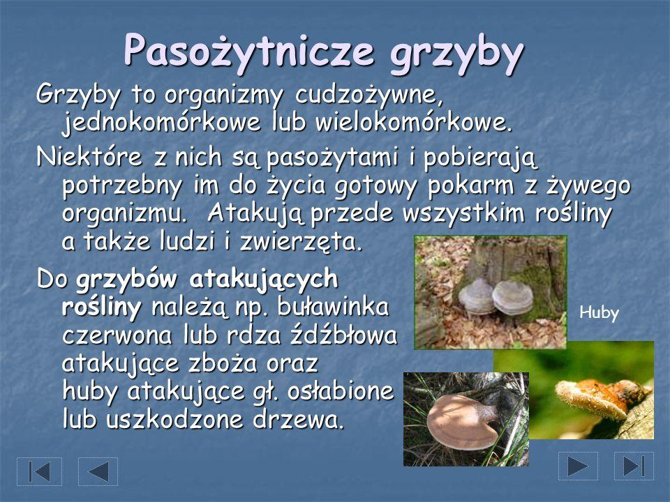 Pasożytnicze grzyby Grzyby to organizmy cudzożywne, jednokomórkowe lub wielokomórkowe.
