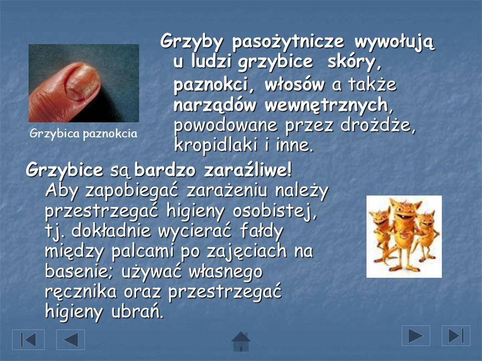 Grzyby pasożytnicze wywołują u ludzi grzybice skóry, paznokci, włosów a także narządów wewnętrznych, powodowane przez drożdże, kropidlaki i inne.