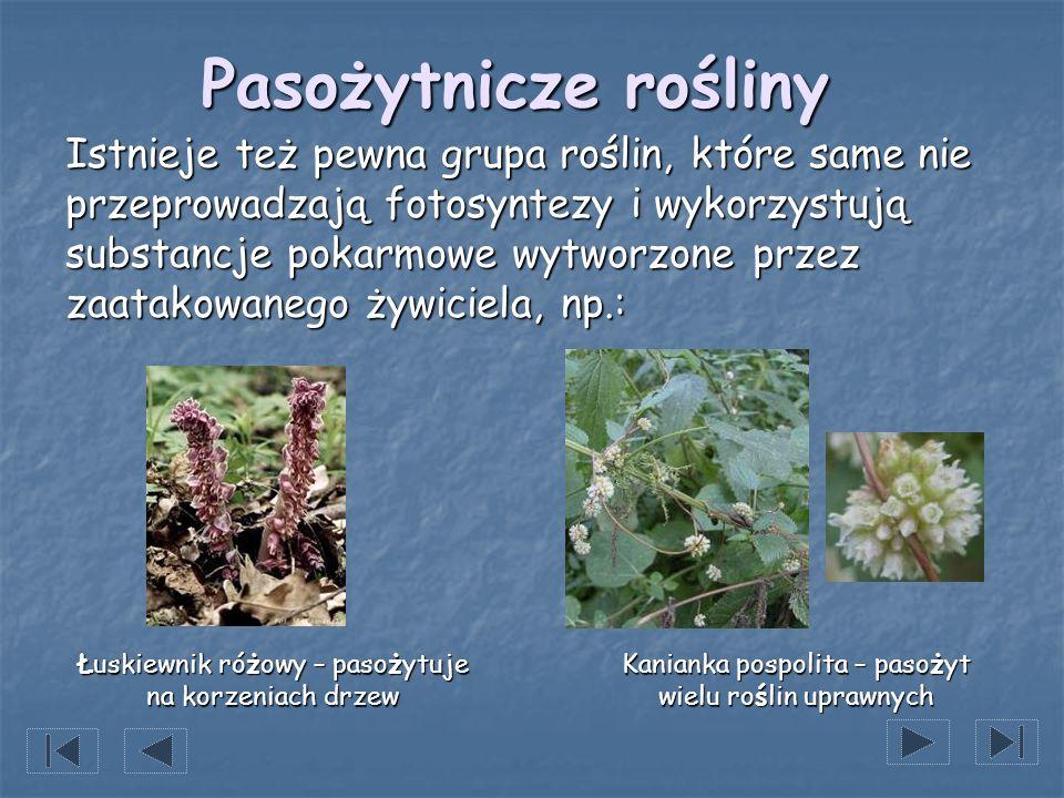 Pasożytnicze rośliny