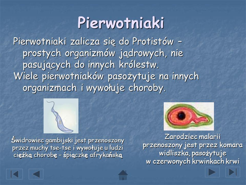 Pierwotniaki Pierwotniaki zalicza się do Protistów – prostych organizmów jądrowych, nie pasujących do innych królestw.