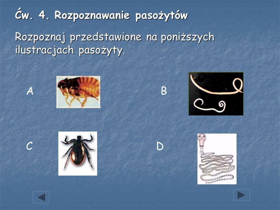 Ćw. 4. Rozpoznawanie pasożytów Rozpoznaj przedstawione na poniższych ilustracjach pasożyty.