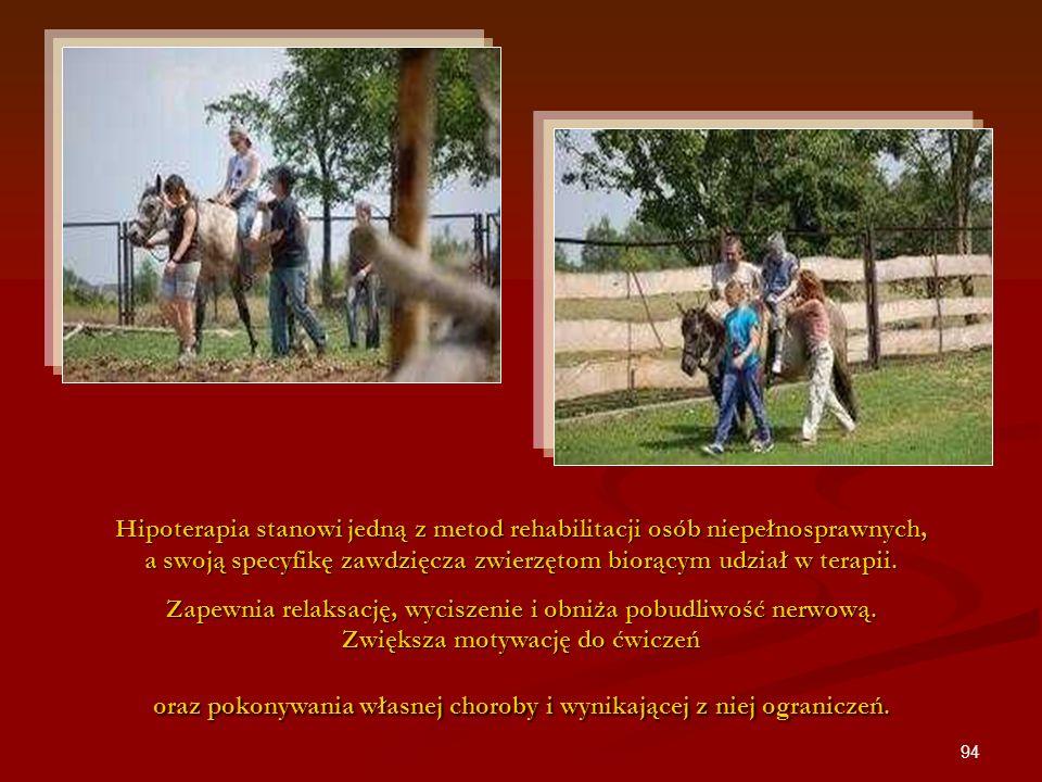 Hipoterapia stanowi jedną z metod rehabilitacji osób niepełnosprawnych, a swoją specyfikę zawdzięcza zwierzętom biorącym udział w terapii.