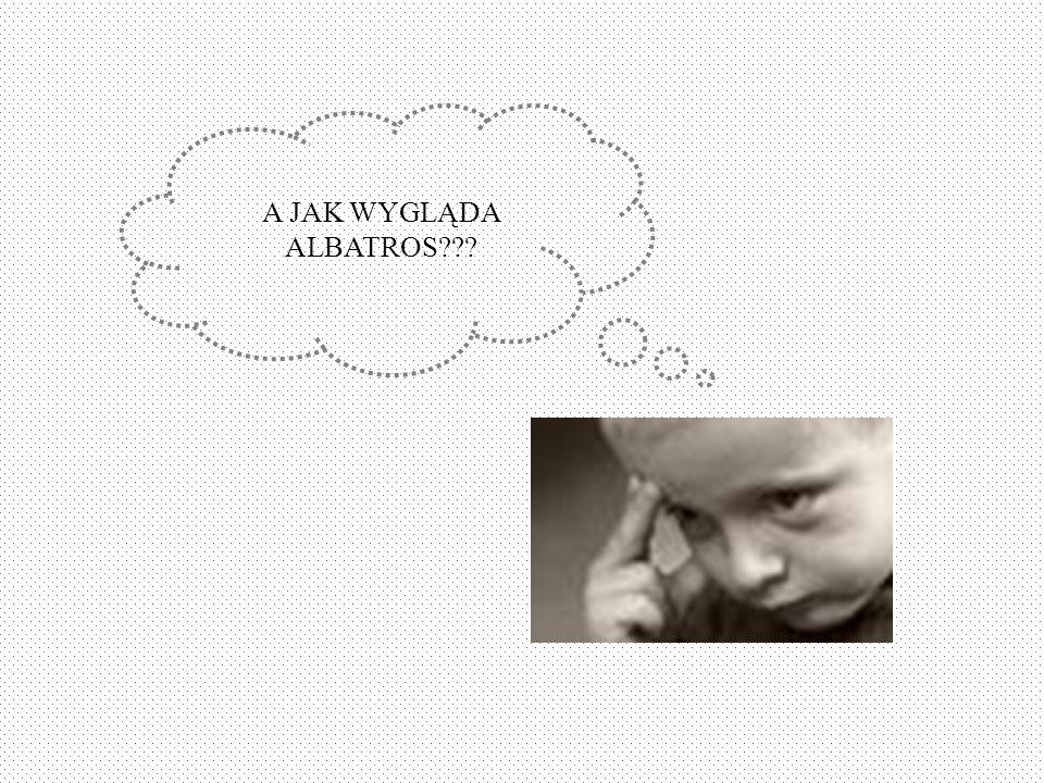 A JAK WYGLĄDA ALBATROS