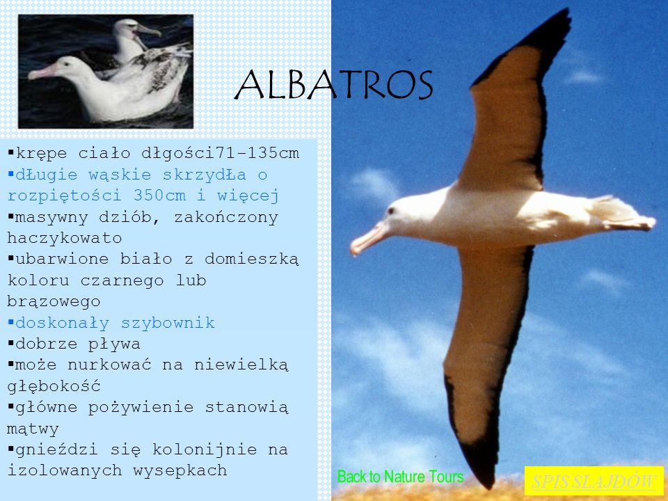 ALBATROS SPIS SLAJDÓW krępe ciało dłgości71-135cm