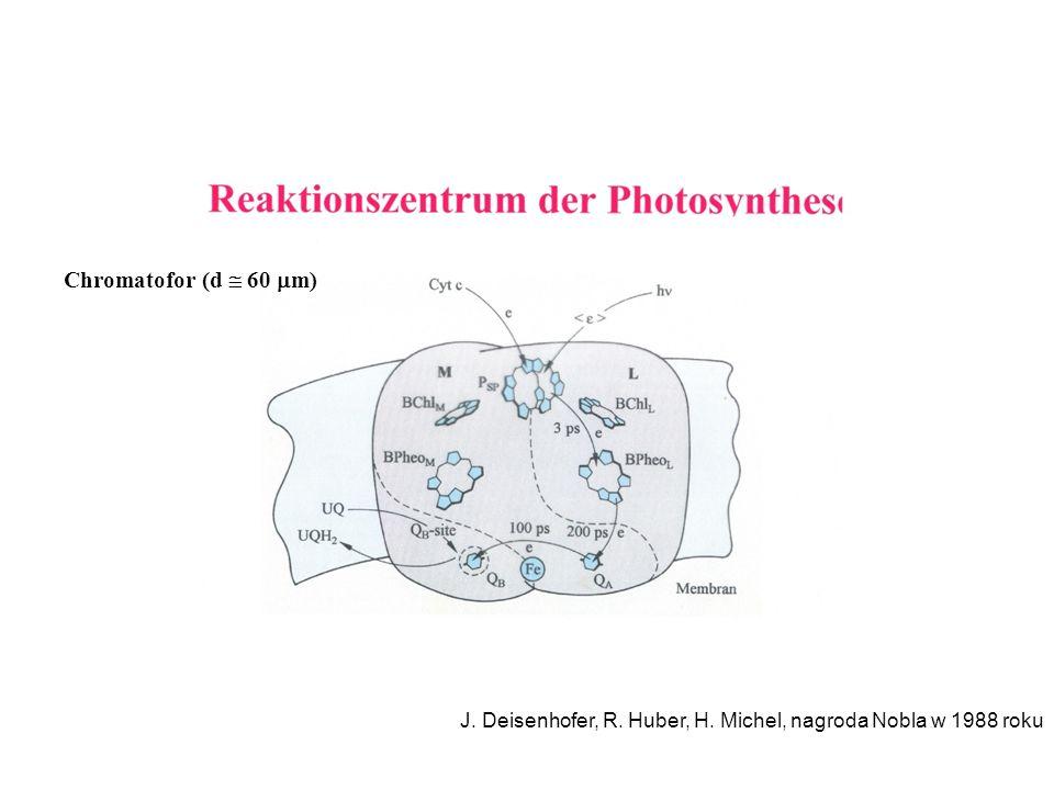 Chromatofor (d  60 m) J. Deisenhofer, R. Huber, H. Michel, nagroda Nobla w 1988 roku