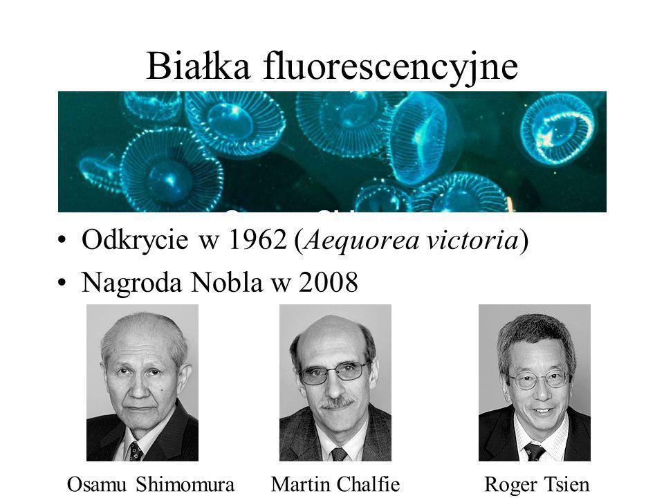 Białka fluorescencyjne