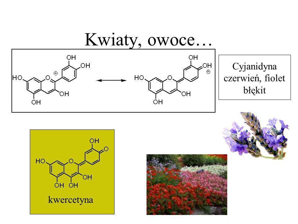 Kwiaty, owoce… Cyjanidyna czerwień, fiolet błękit kwercetyna