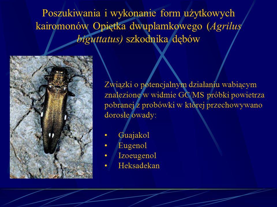 Poszukiwania i wykonanie form użytkowych kairomonów Opiętka dwuplamkowego (Agrilus biguttatus) szkodnika dębów