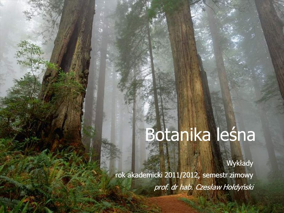 Botanika leśna Wykłady rok akademicki 2011/2012, semestr zimowy