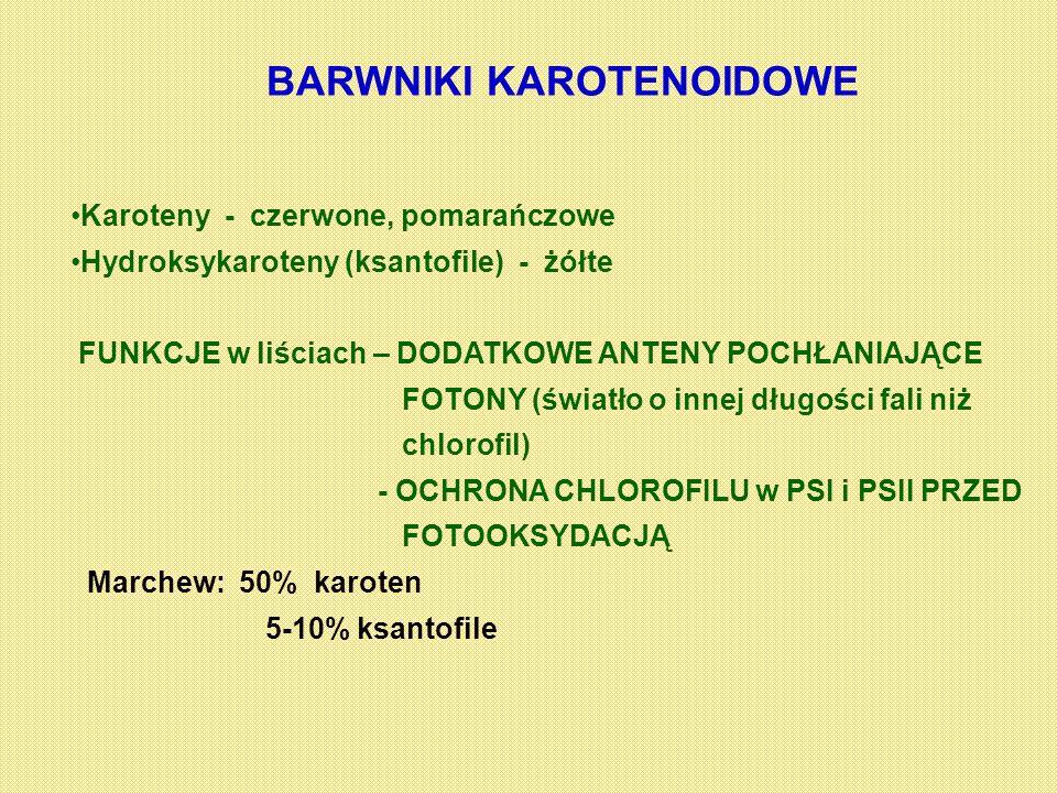 BARWNIKI KAROTENOIDOWE