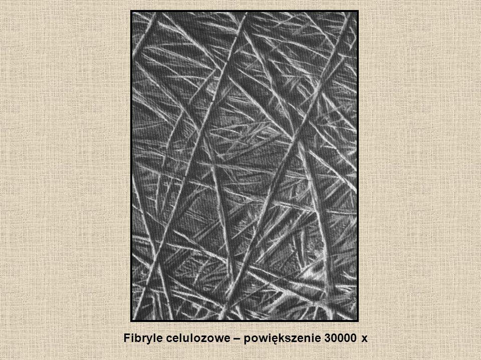 Fibryle celulozowe – powiększenie 30000 x