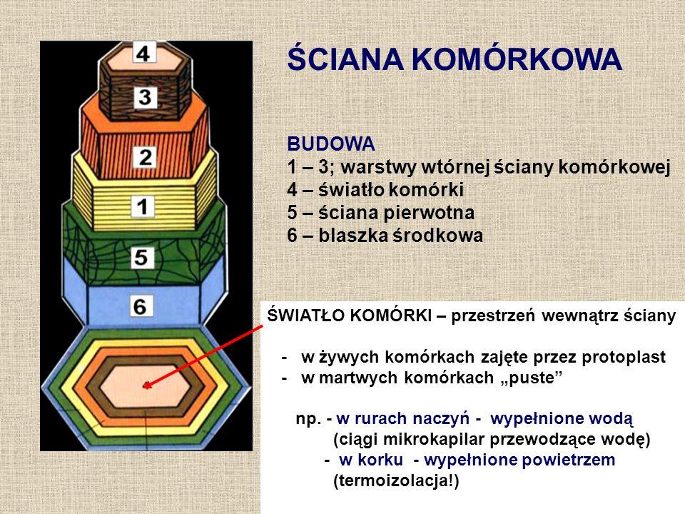 ŚCIANA KOMÓRKOWA BUDOWA 1 – 3; warstwy wtórnej ściany komórkowej