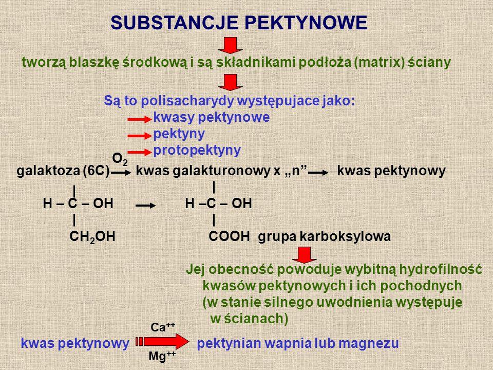 SUBSTANCJE PEKTYNOWE tworzą blaszkę środkową i są składnikami podłoża (matrix) ściany. Są to polisacharydy występujace jako: