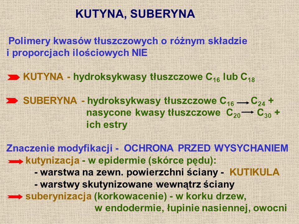 KUTYNA, SUBERYNA Polimery kwasów tłuszczowych o różnym składzie. i proporcjach ilościowych NIE. KUTYNA - hydroksykwasy tłuszczowe C16 lub C18.
