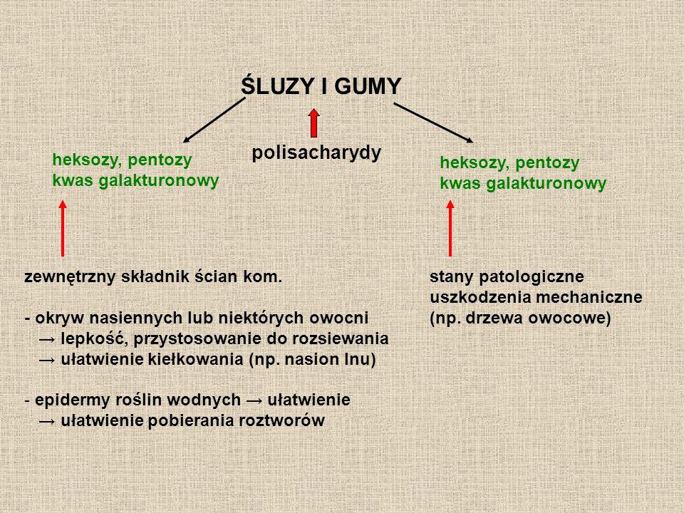 ŚLUZY I GUMY polisacharydy heksozy, pentozy kwas galakturonowy