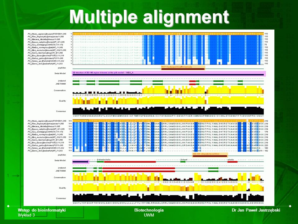 Multiple alignment Wstęp do bioinformatyki Wykład 3 Biotechnologia UWM