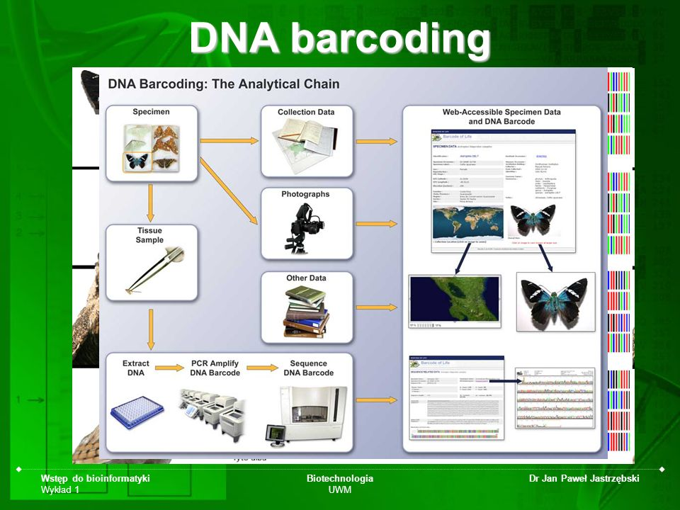DNA barcoding Wstęp do bioinformatyki Wykład 1 Biotechnologia UWM