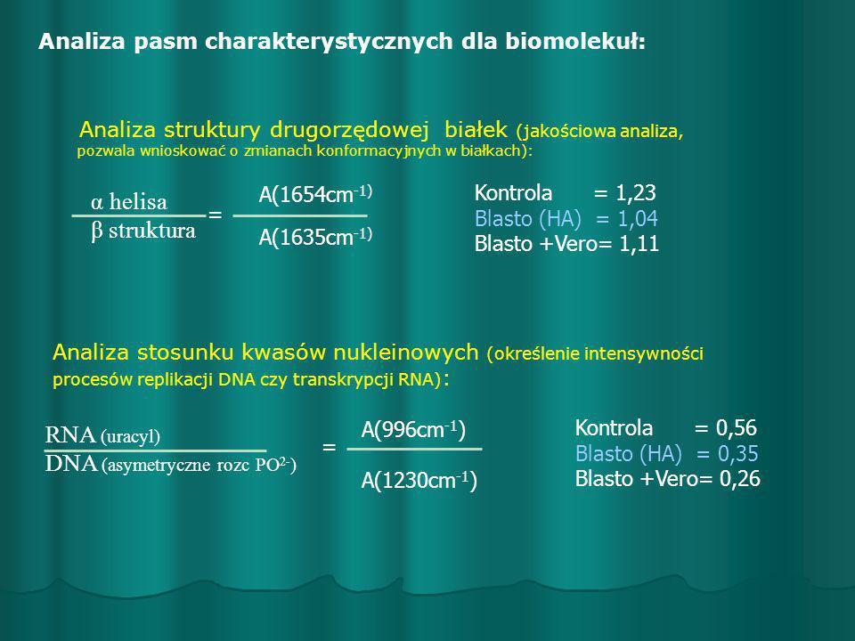 DNA (asymetryczne rozc PO2-)
