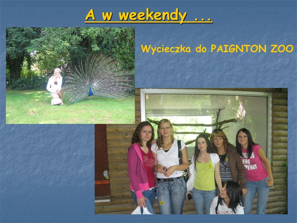 A w weekendy ... Wycieczka do PAIGNTON ZOO