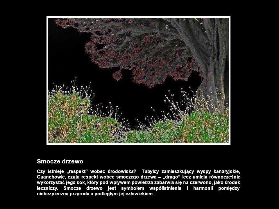 Smocze drzewo