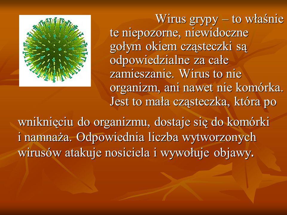 Wirus grypy – to właśnie te niepozorne, niewidoczne gołym okiem cząsteczki są odpowiedzialne za całe zamieszanie. Wirus to nie organizm, ani nawet nie komórka. Jest to mała cząsteczka, która po