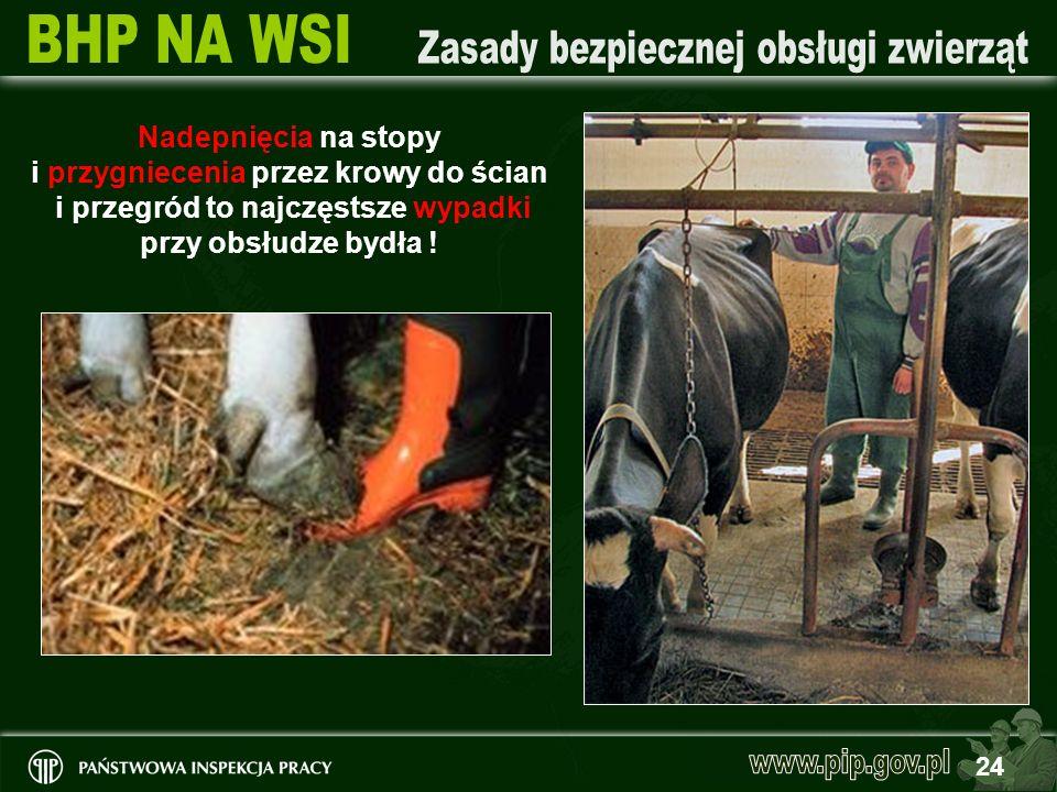 Nadepnięcia na stopy i przygniecenia przez krowy do ścian i przegród to najczęstsze wypadki przy obsłudze bydła !