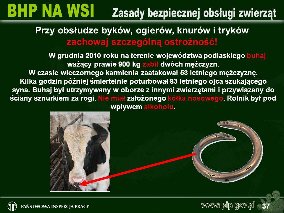 Przy obsłudze byków, ogierów, knurów i tryków zachowaj szczególną ostrożność!
