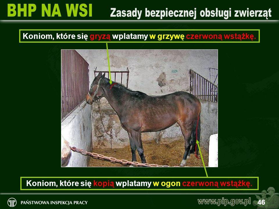 Koniom, które się gryzą wplatamy w grzywę czerwoną wstążkę.
