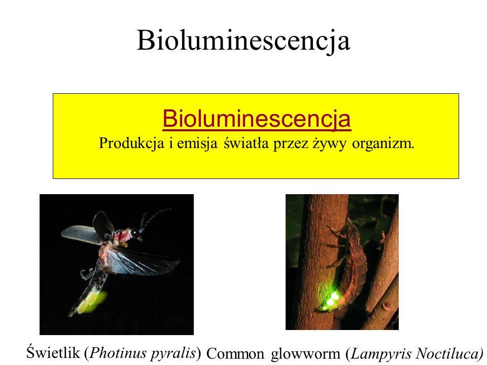 Produkcja i emisja światła przez żywy organizm.