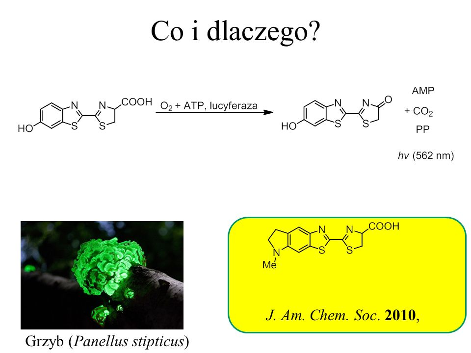 Co i dlaczego J. Am. Chem. Soc. 2010, Grzyb (Panellus stipticus)