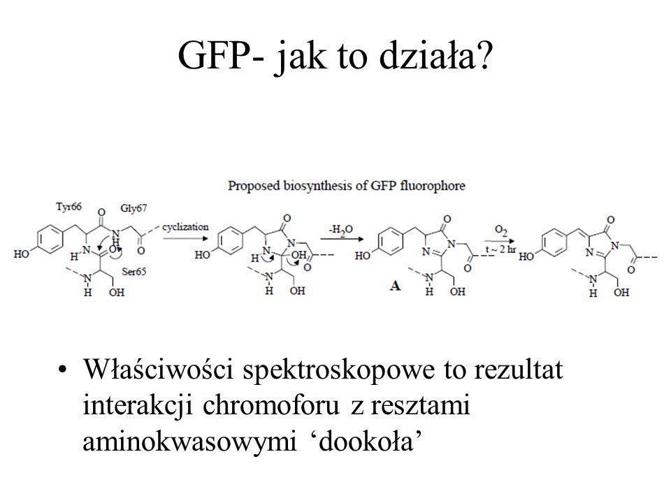 GFP- jak to działa.